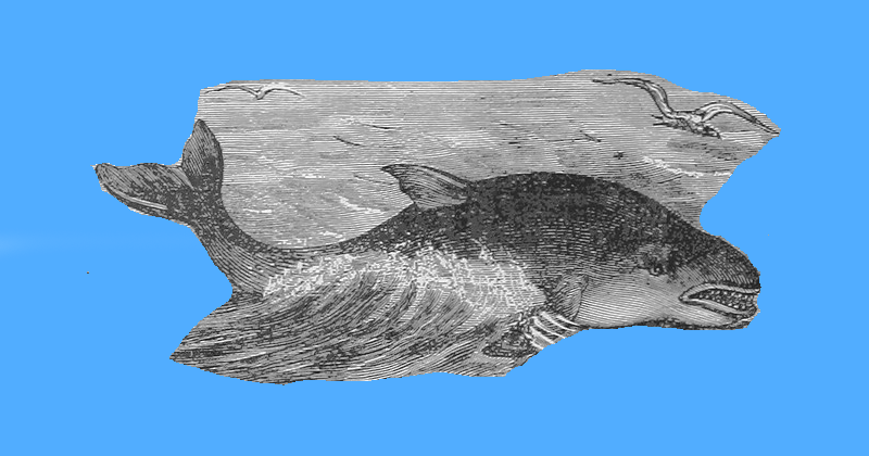 Тайна яркого проекта, или как РИА Новости рассказали обисследовании серых китов