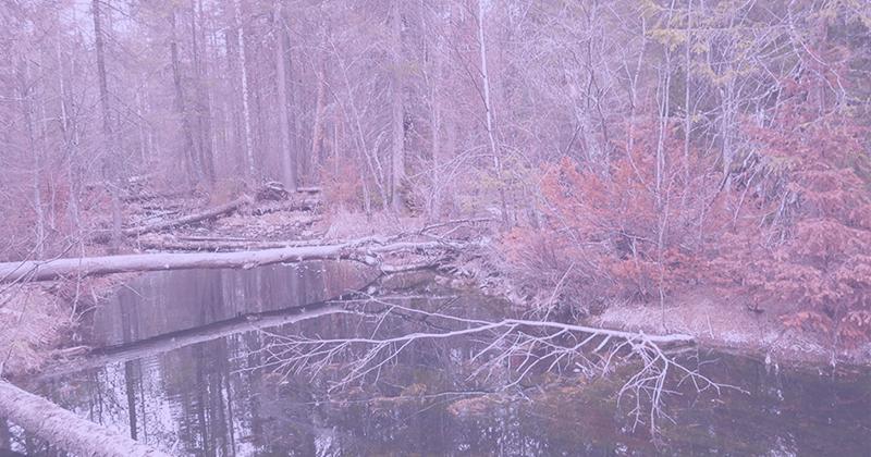 Как нерешенная экологическая проблема заставила создать сайт, группы всоцсети имессенджере